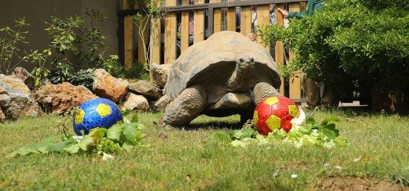 Kaplumbağa Tuki'den derbi tahmini